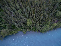 Green Pine Trees Near Blue Body of Water during Daytime Royalty Free Stock Photo