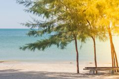 Green pine trees on sand beach with beautiful seascape view and blue sky in the background at Chao Lao Beachใ. Green pine trees on sand beach with beautiful Royalty Free Stock Photos