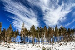 Green Pine Trees Under Cloudy Sky during Daytime Royalty Free Stock Photo