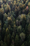 Green Pine Trees View from Above during Daytime Stock Photo