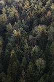 Green Pine Trees View from Above during Daytime Royalty Free Stock Photos