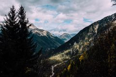 Green Pine Trees on White and Gray Mountains Stock Photo