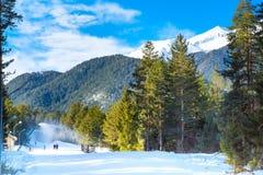 Green pine trees and white snow peak of the mountain behind. Green pine trees, white snow mountain peaks, ski slope cannons in Bansko, Bulgaria Royalty Free Stock Photo