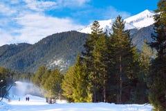 Green pine trees, white snow peak of the mountain behind Stock Photos