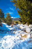 Green pine trees and white snow peak of the Royalty Free Stock Photography