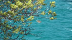 Green pine and turquoise sea water, beautiful seascape. UHD 4K stock video