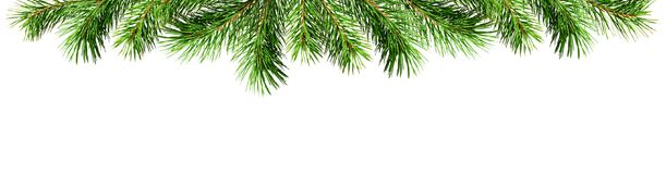 Green pine twigs for Christmas top border. Isolated on white background. Flat lay. Top view Royalty Free Stock Photos