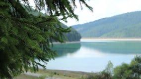 Green Pine Twigs on Green Lakeside stock footage