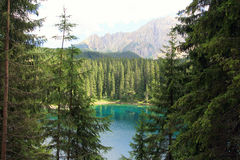 Green pine wood paradise, Italy Royalty Free Stock Image