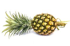 Green pineapple Stock Image