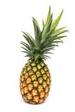 Green pineapple. Pineapple with green leaves on white background Stock Image