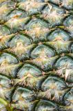 Green pineapple shell texture Stock Images