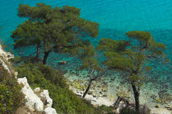 Green pines. Near the azure sea Royalty Free Stock Photos