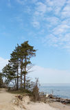 The green pines standing at the seashore in Latvia Royalty Free Stock Images