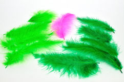Green and pink Stock Image