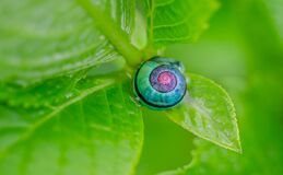 Green Pink and Blue Snail on Top of Green Leaf Stock Photos