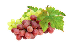 Green and pink grapes Stock Photography
