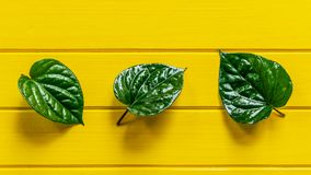 Green Piper betle leaf on yellow wood background. Top view stock image