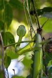 Green pit viper in jungle Stock Photo