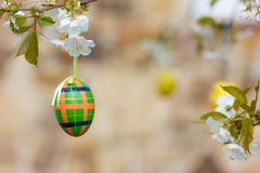 Plaid Egg (low DOF) Royalty Free Stock Photography