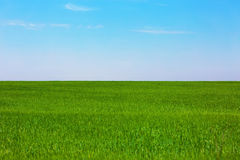 Green plain field Stock Photo