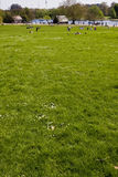 Green plain at Hyde Park. London Stock Photo
