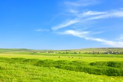Green plain in summer. Green summer field and blue sky stock photo