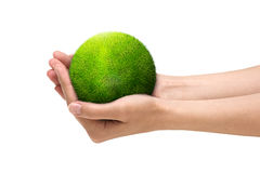 Green planet in human hands stock photography