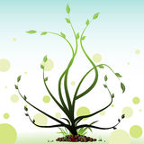 Green plant. Abstract colorful illustration with green plant with small leaves Royalty Free Stock Photography