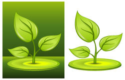 Green plant. With greater leaves on white-green background, illustration Royalty Free Stock Photography