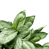 Green plant. Green leaves background with copy space. Clipping path Stock Image