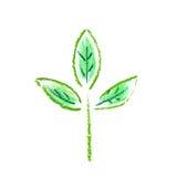 Green plant Stock Photo
