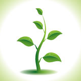 Green plant. Vector illustration of green plant. 8 eps Stock Photography