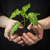 Green plant Royalty Free Stock Image