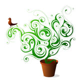 Green plant Royalty Free Stock Photography