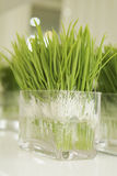 Green plant. In crystal flowerpot Stock Photos