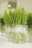 Green plant. In crystal flowerpot stock photos