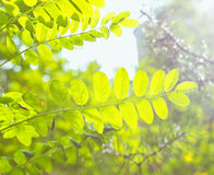 Green plant. Growing in summer forest royalty free stock images