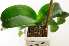 Green Plant Royalty Free Stock Photo