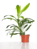 Green plant royalty free stock images