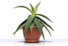 Green plant Royalty Free Stock Photos