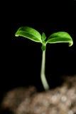 Green plant royalty free stock photos