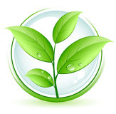 Green plant vector illustration