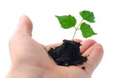 Green plant Royalty Free Stock Photo