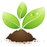 Green plant. Clipart illustration design Stock Photography
