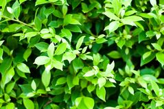 Green plant abstract background, nature beauty, soothing feeling. Green plant with bright light abstract background, nature beauty, soothing feeling royalty free stock images