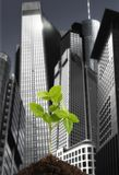 Green plant against Skyline Royalty Free Stock Images