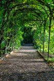 A green plant arch with a path leading through. A lovely green tree shaped arch with a path leading through offering shade for those who pass through Stock Photos