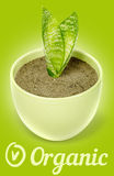 Green plant as organic symbol. Green plant with two fresh leaves in flowerpot. Organic life illustration Royalty Free Stock Images