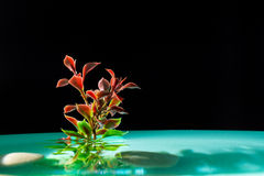 Green plant in azure water on a black background Stock Image